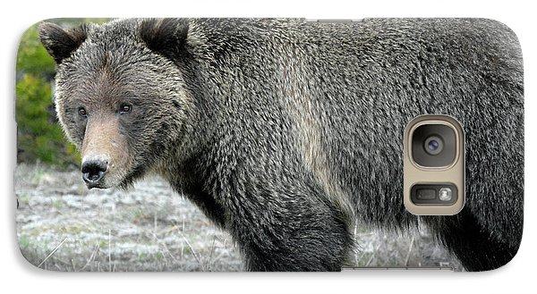 Galaxy Case featuring the photograph Yellowstone Grizzly On The Hunt by Bruce Gourley