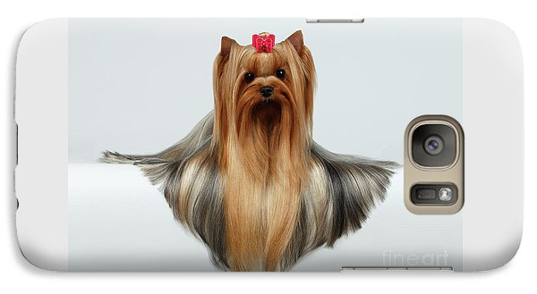 Yorkshire Terrier Dog With Long Groomed Hair Lying On White  Galaxy S7 Case by Sergey Taran