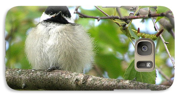 Galaxy Case featuring the photograph Young Black-capped Chickadee by Angie Rea