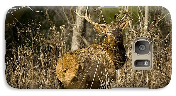 Galaxy Case featuring the photograph Young Bull On A Woodland Trail by Michael Dougherty