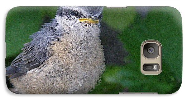 Galaxy Case featuring the photograph Young Red-breasted Nuthatch No. 1 by Angie Rea