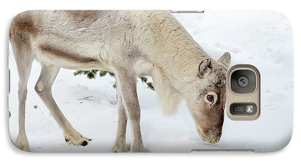 Galaxy Case featuring the photograph Young Rudolf by Delphimages Photo Creations