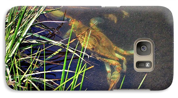 Galaxy S7 Case featuring the photograph Maryland Blue Crab Lurking In An Assateague Marsh by Bill Swartwout Fine Art Photography