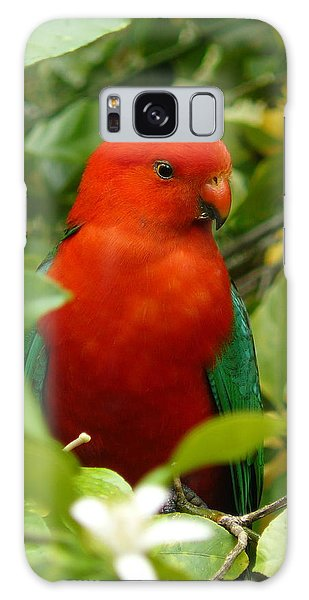 Aussie King Parrot Galaxy Case by Margaret Stockdale