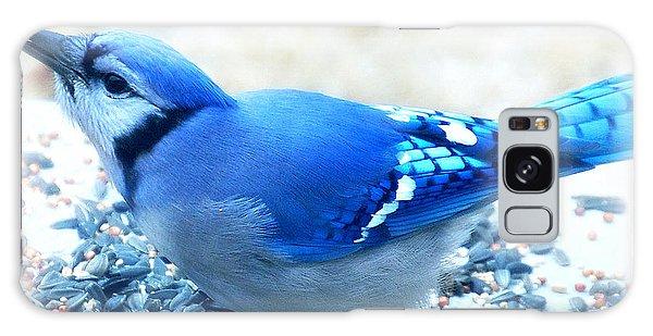 Bright Blue Jay  Galaxy Case
