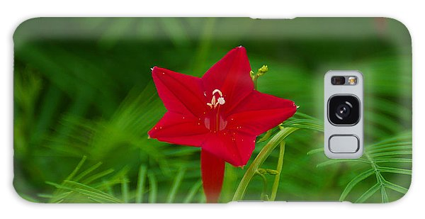 Cypressvine Morning Glory Galaxy Case by Blair Wainman