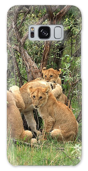 Masai Mara Lion Cubs Galaxy Case