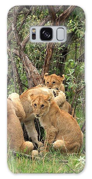Masai Mara Lion Cubs Galaxy Case