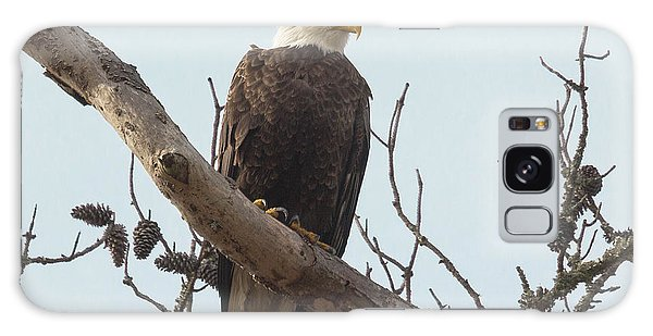Resting Bald Eagle Galaxy Case