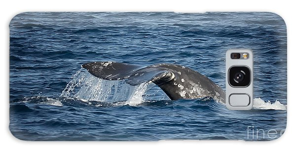 Whale Fluke In Dana Point Galaxy Case by Loriannah Hespe