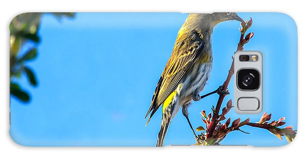 Haybale Galaxy Case -  Yellow-rumped Warbler by Robert Bales