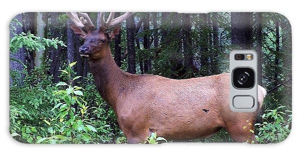062505 Elk In Velvet Galaxy Case
