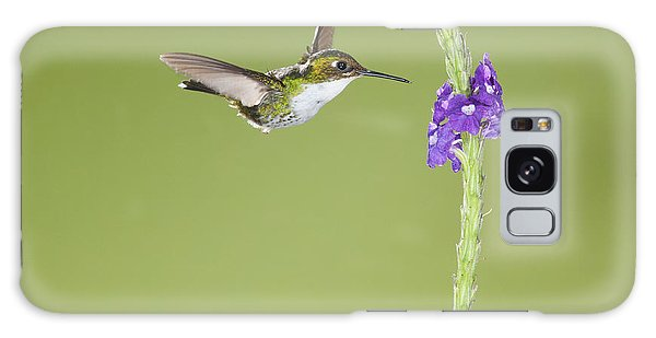 Andean Emerald Hummingbird Galaxy Case