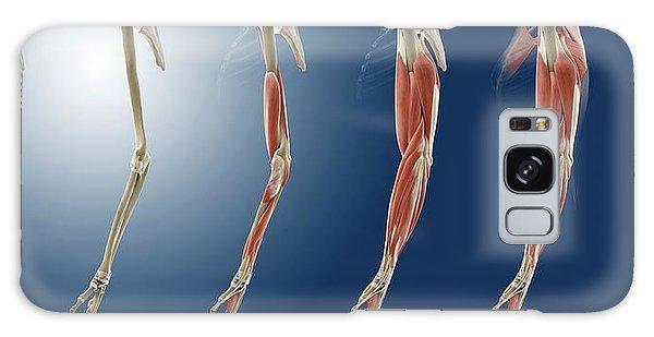 Limb Galaxy Case - Arm Anatomy by Springer Medizin