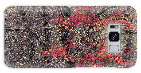 Autumn's Palette Galaxy Case by Alan L Graham