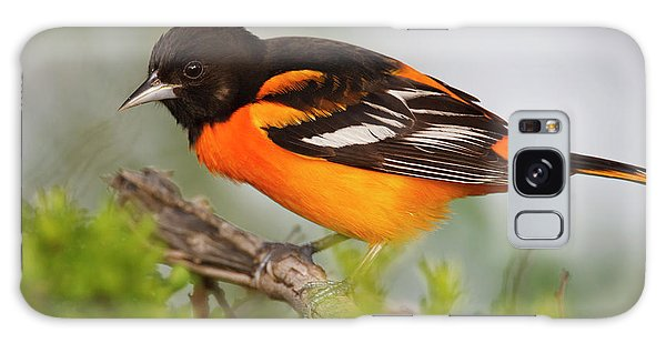 Baltimore Oriole Foraging Galaxy S8 Case