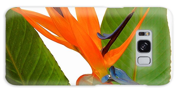 Bird Of Paradise Galaxy Case by Peg Urban