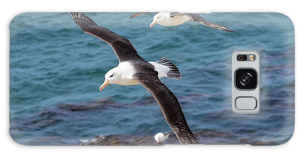 Albatross Galaxy Case - Black-browed Albatross (thalassarche by Martin Zwick