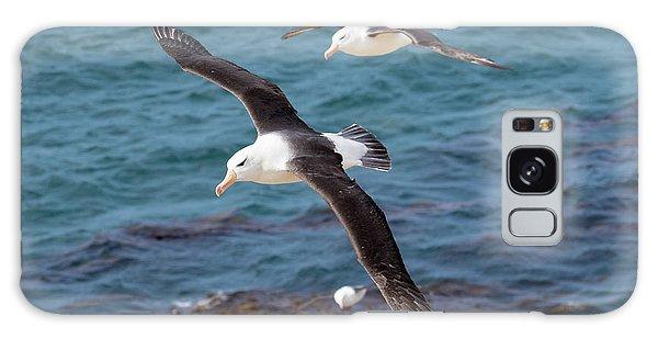 Black-browed Albatross (thalassarche Galaxy Case