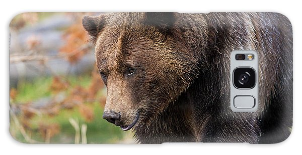 Grizzly Bears Galaxy Case - Brown Bear, Grizzly, Ursus Arctos, West by Maresa Pryor