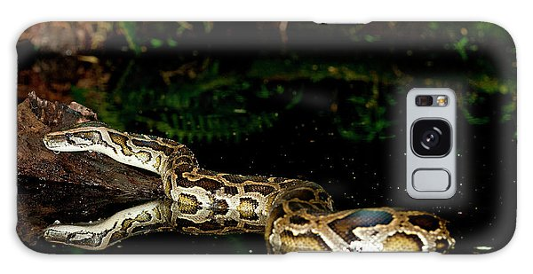 Burmese Python, Python Molurus Galaxy Case by David Northcott