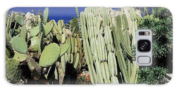 Fence Post Galaxy Case - Cactus Garden by Philippe Psaila/science Photo Library