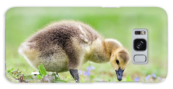 Canada Goose Galaxy Case - Canada Goose by John Devries/science Photo Library