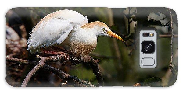 Cattle Egret In A Tree Galaxy Case