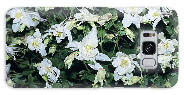 Aquilegia Galaxy Case - Columbine by Adrian Thomas/science Photo Library
