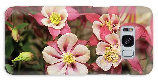 Aquilegia Galaxy Case - Columbine Flowers by Adrian Thomas/science Photo Library