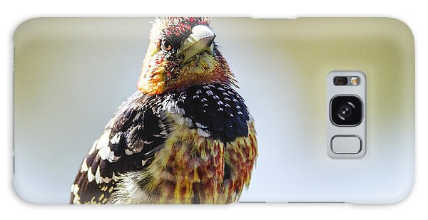 Crested Barbet Galaxy Case
