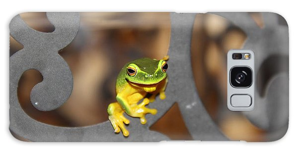 Galaxy Case featuring the photograph Dainty Tree Frog by Debbie Cundy
