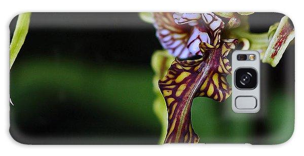 Dendrobium Spectabile Galaxy Case