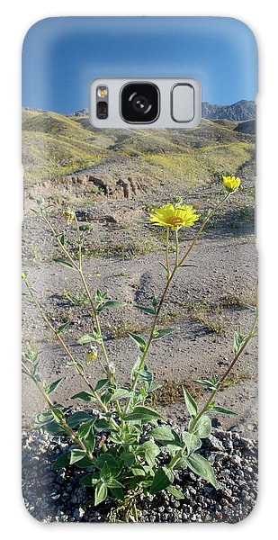 Desert Flora Galaxy Case - Desert Sunflower (geraea Canescens) by Bob Gibbons/science Photo Library