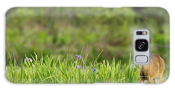 White-tailed Deer Galaxy Case - Doe Feeding On Prairie Iris, Grimes by Maresa Pryor