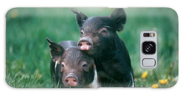 Domestic Piglets Galaxy Case