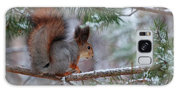 Eurasian Red Squirrel Galaxy Case
