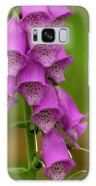 Cairngorms National Park Galaxy Case - Europe, Scotland, Cairngorm National by Jaynes Gallery
