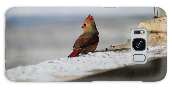 Female Cardinal In Winter Galaxy Case