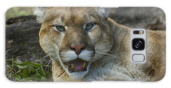 Florida Panther Galaxy Case by Anne Rodkin
