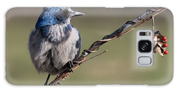 Florida Scrub Jay Galaxy Case by Meg Rousher