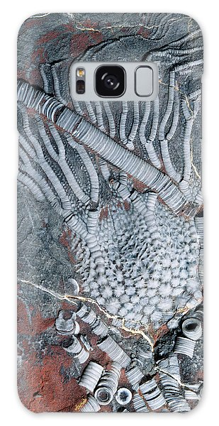 Sea Lily Galaxy Case - Fossil Crinoid by Sinclair Stammers/science Photo Library