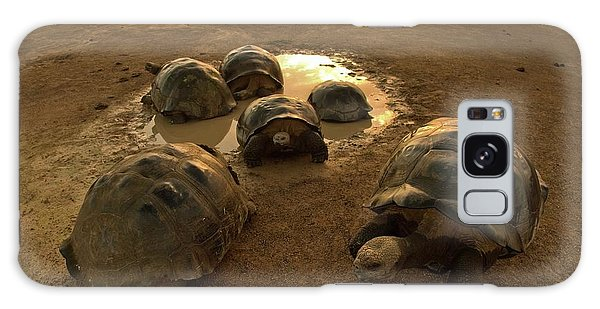 Cold Day Galaxy Case - Galapagos Giant Tortoises On Volcano Rim by Paul D Stewart