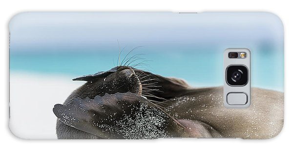 Galapagos Sea Lion Pup Covering Face Galaxy Case