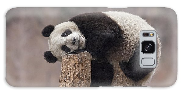 Giant Panda Cub Wolong National Nature Galaxy Case