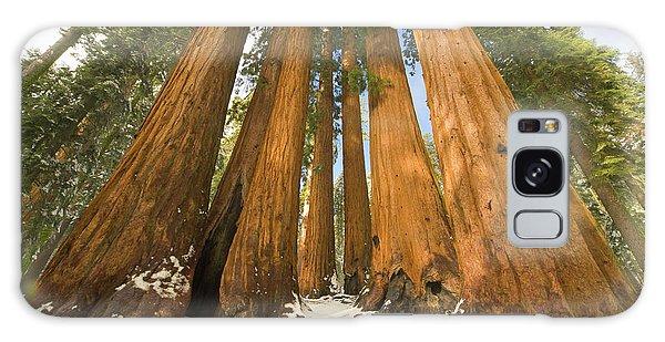 Giant Sequoias Sequoia N P Galaxy Case