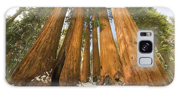 Giant Sequoias Sequoia N P Galaxy Case