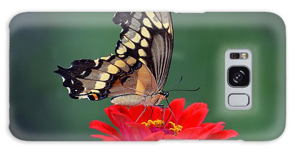 Giant Swallowtail Galaxy Case