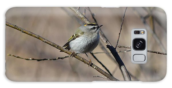 Golden-crowned Kinglet Galaxy Case