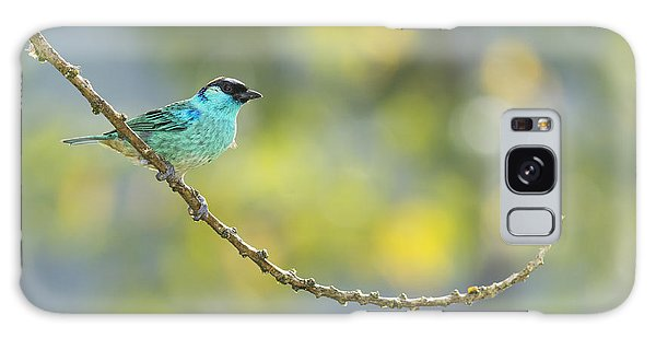 Golden-naped Tanager Galaxy Case